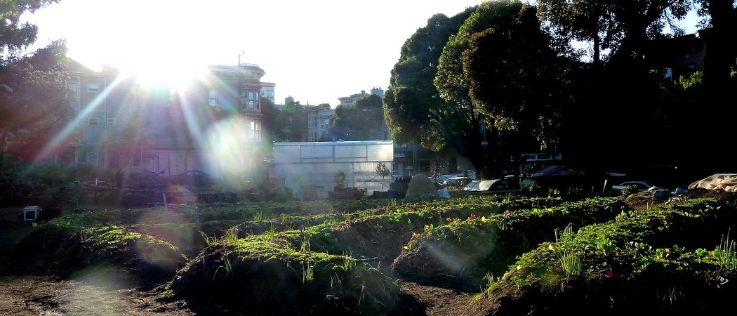 hayes valley farm
