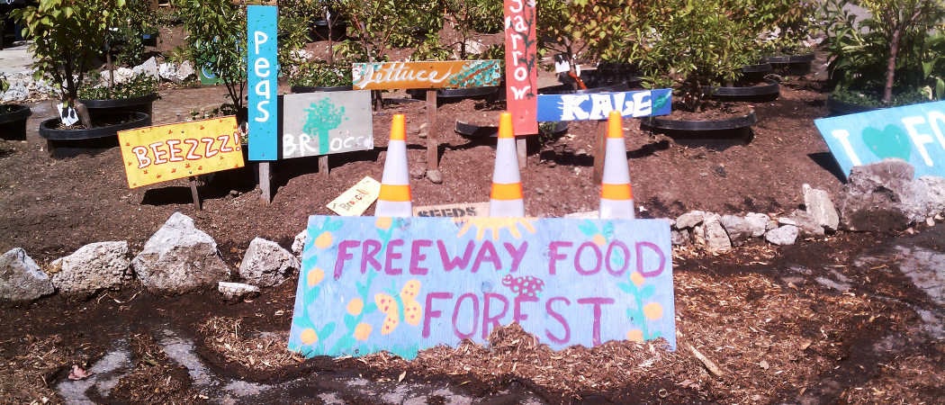 Hayes Valley Farm: from freeway to food forest